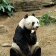 Giant panda — Stock Photo #12235549