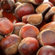 Chestnut — Stock Photo #12235602