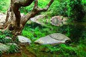 Strom a voda v džungli — Stock fotografie