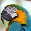 Colorful macaw — Stock Photo #12359724