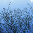 Tree and mountain in winter blue — Stock Photo