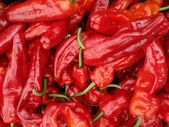 Red hot chili peppers displayed — Stock Photo