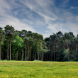 Forest Landscape — Stockfoto