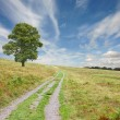 Path with Tree — Stock Photo