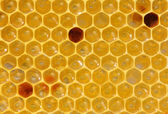 Honeycomb with nectar and pollen — Stock Photo