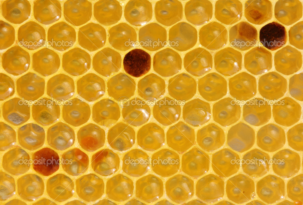 New bee honeycombs filled with nectar and pollen. Hanging drop of nectar. — Stock Photo #11393345