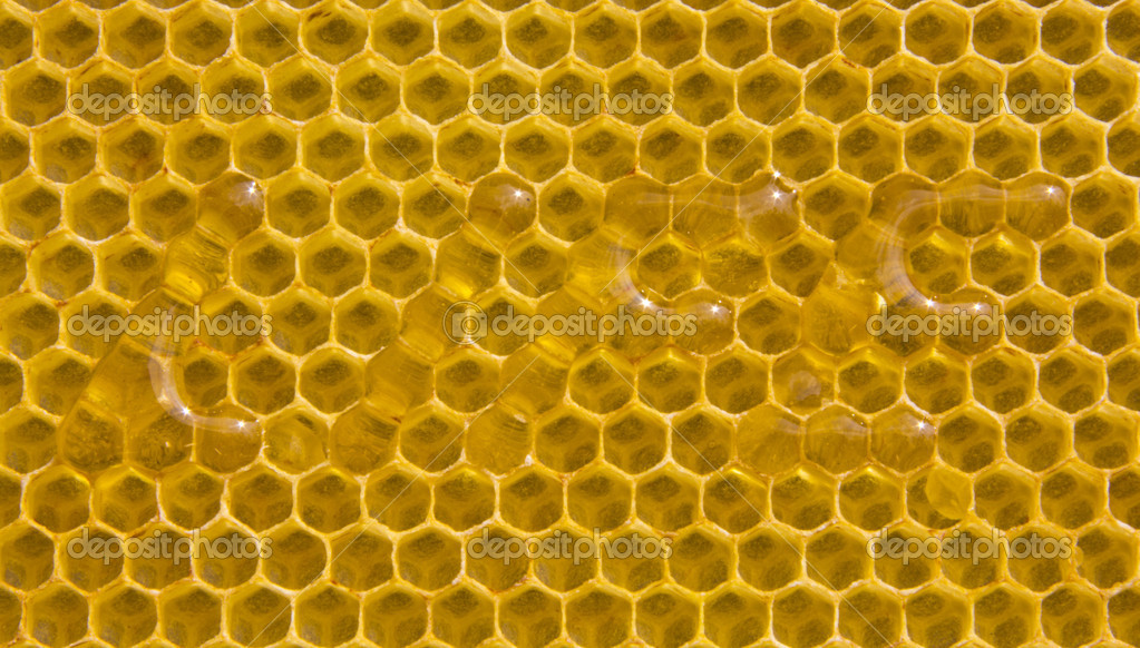 "The word ""life"" was made on combs. Appropriate cell filled with honey. — Stockfoto #11393610"