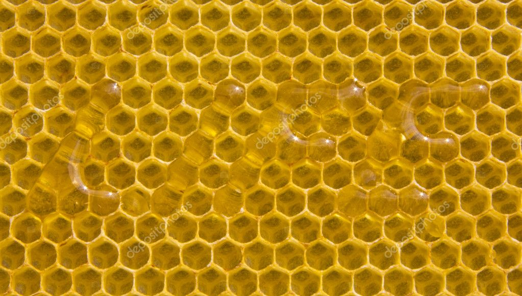 "The word ""life"" was made on combs. Appropriate cell filled with honey. — Foto de Stock   #11393610"