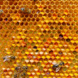 Stock Photo: Pollen in combs