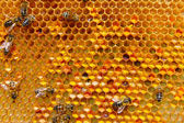 Pollen in combs — Stock Photo
