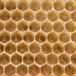 Queen bee in a delayed cell eggs — Stockfoto