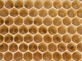королева пчел в яйцах задержки ячеек — Стоковое фото