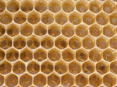 Królowa pszczół w jajach opóźniony komórka — Zdjęcie stockowe