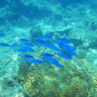 Bright blue shoal - Stock Photo