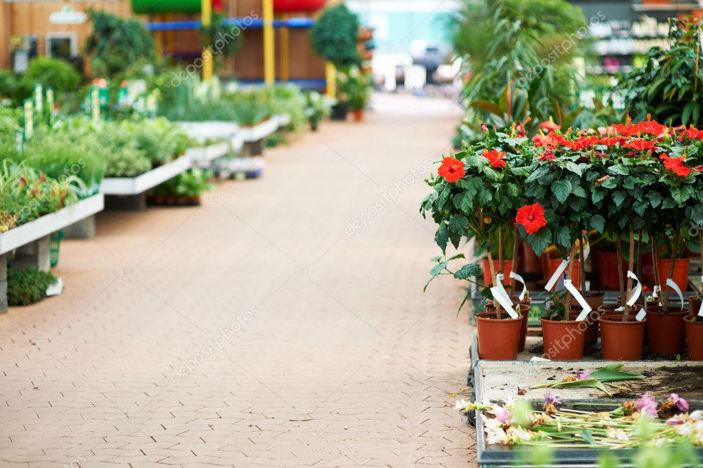 Pathway going in to nursery with flowers in pots on each side — Stock Photo #12154510