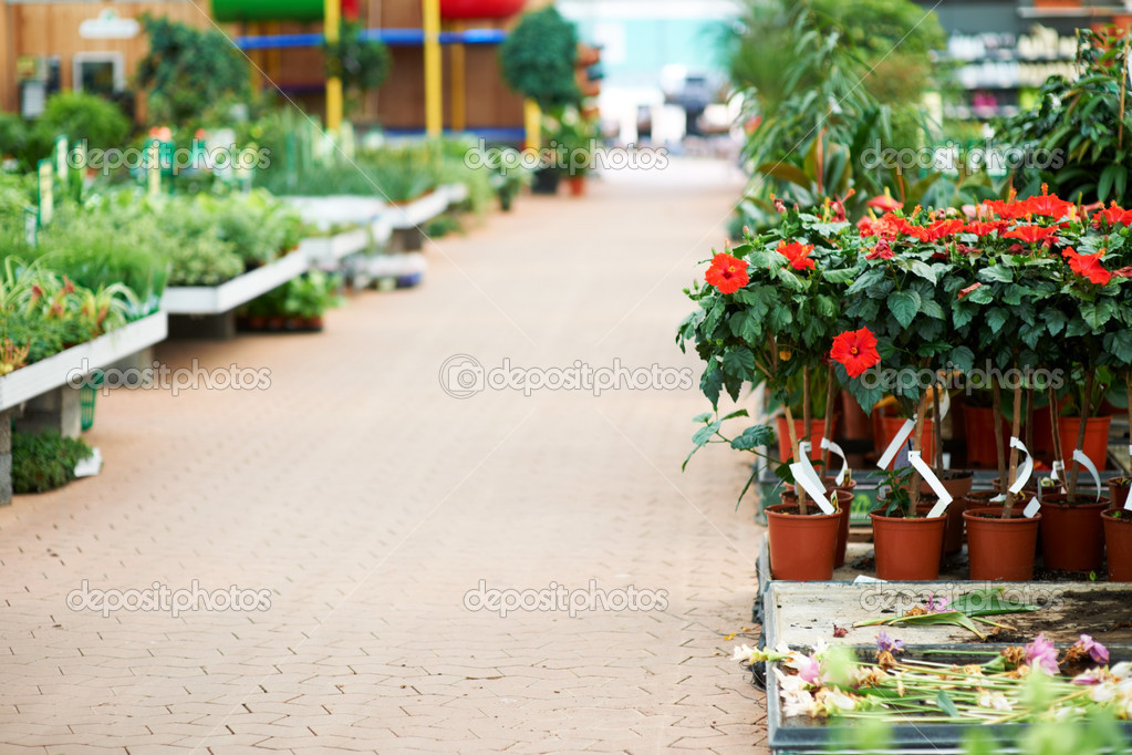 Pathway going in to nursery with flowers in pots on each side — Foto Stock #12154510