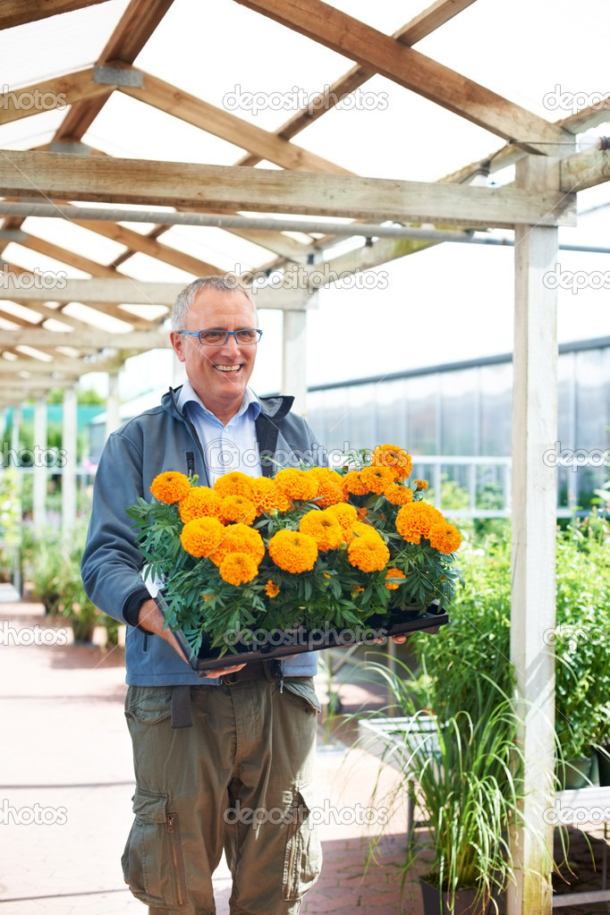 Mature caucasian male florist holding a tray of orange flowers while smiling — Stock Photo #12154633