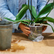 Royalty-Free Stock Photo: Taking good care of an exotic plant