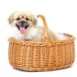 Royalty-Free Stock Photo: The ultimate gift basket