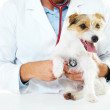 Check-ups are key to maintaining your pet's health - Stockfoto