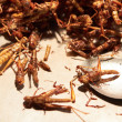 Fried grasshoppers at a Thai market - Stock Photo
