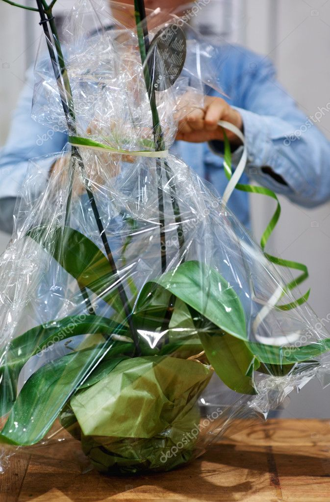 Cropped view of a florist's hands as she packages an orchid plant in cellophane — Stock Photo #12240010