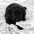Having a pet can be expensive - Foto Stock