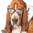 Certainly smarter than any normal dog - Stock Photo