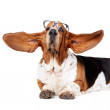 What big ears you have! - Stock Photo
