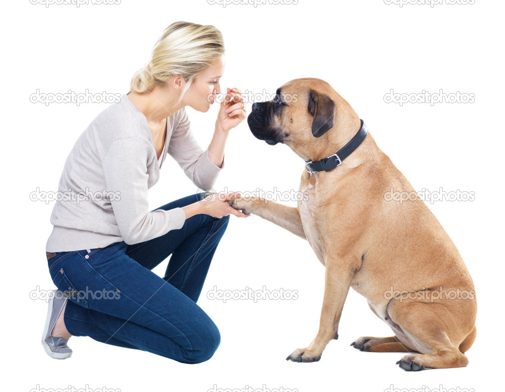 Pretty young woman teaching her dog how to give her his paw using a treat - isolated on white — Stock Photo #12303633
