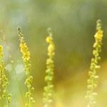 Micro Life in Green — Stock Photo