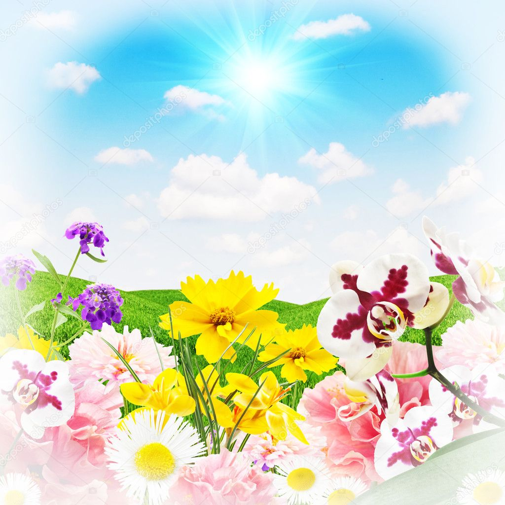 Beautiful flowers on a background of grass and sky — Stock Photo #11098842