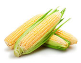 Fresh corn fruits — Stock Photo
