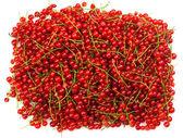 Rote johannisbeere — Stockfoto
