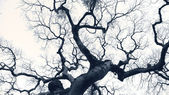 Dramatic tree — Stock Photo