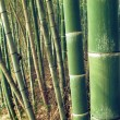 Green bamboo forest — Stock Photo #12334877