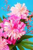 Bunch of peony — Stock Photo
