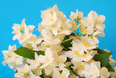 Bunch of jasmine — Stock Photo