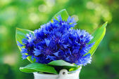 Bouquet of fresh cornflowers — Stock Photo
