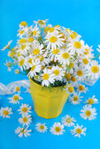 Bunch of camomile — Stock Photo