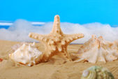 Seashells on the beach — Foto Stock