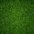 Green Grass — Stock Photo #11930190