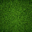 Stockfoto: Green Grass