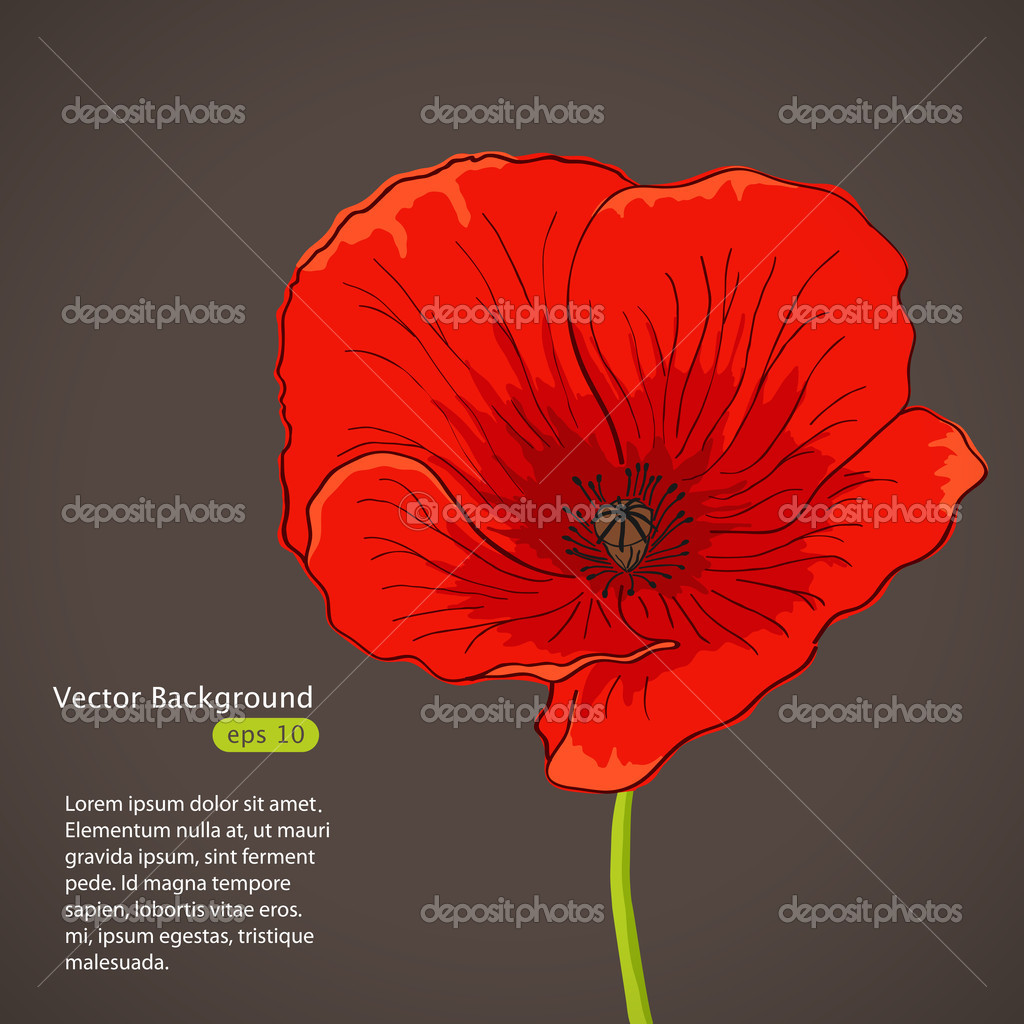 Vector pictures with red poppy flower  Stock Vector #12295963