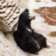 Sloth bear — Stock Photo #11331909