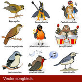 Vector songbirds — Stock Vector