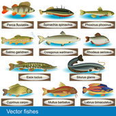 Vector Fishes — Stock Vector