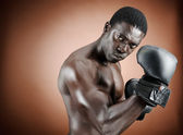 Well defined boxer — Stock Photo