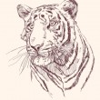 Royalty-Free Stock Vector Image: Tiger hand drawn