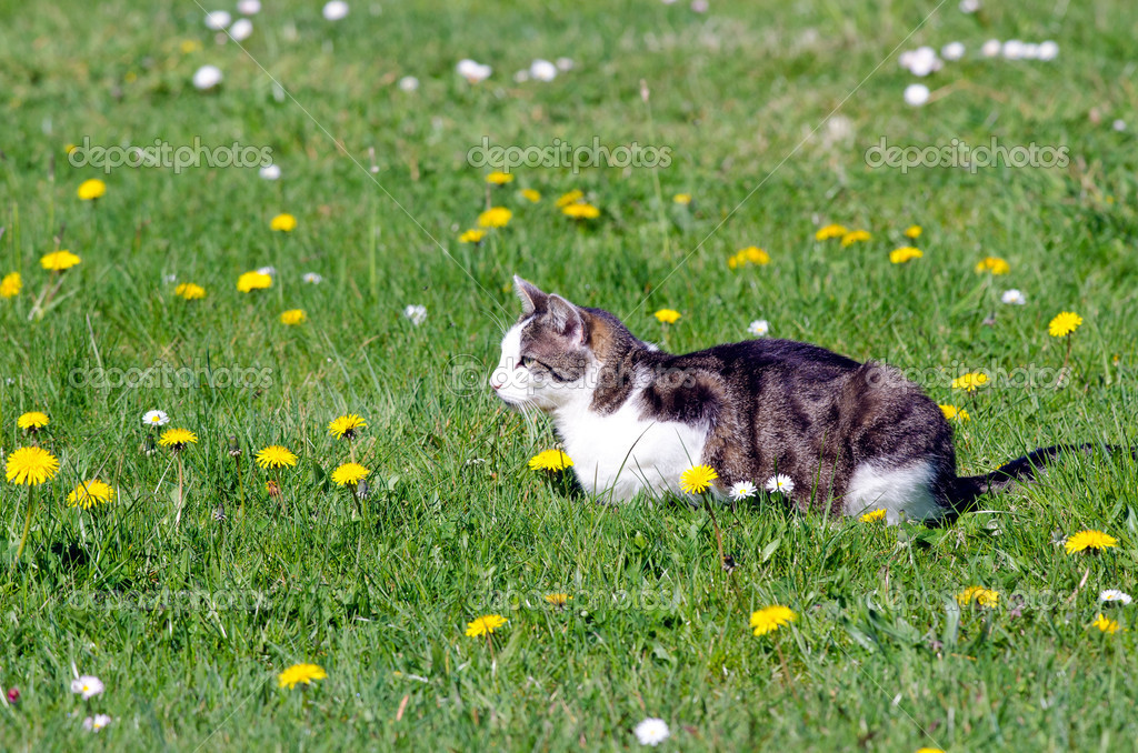 A young cat lying on a flower meadow. — Stock Photo #11402171